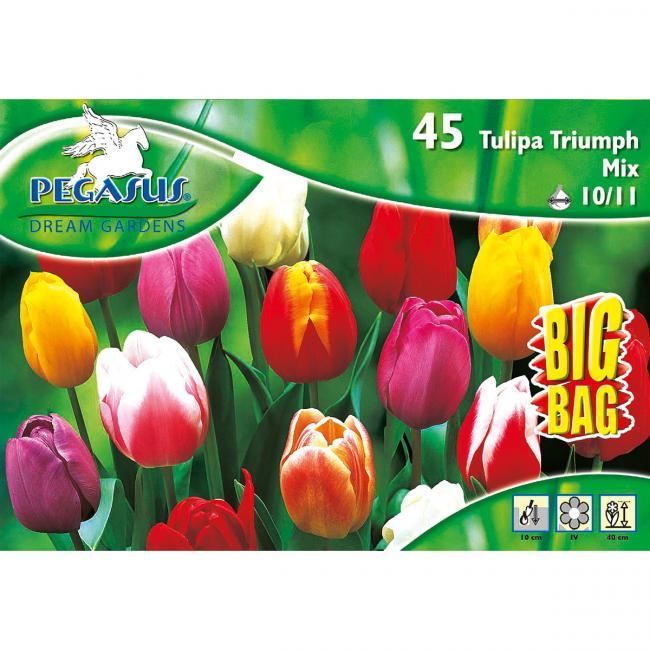 1.170 Tulpen - Triumph Tulpe Mix Big Bag Blumenzwiebeln