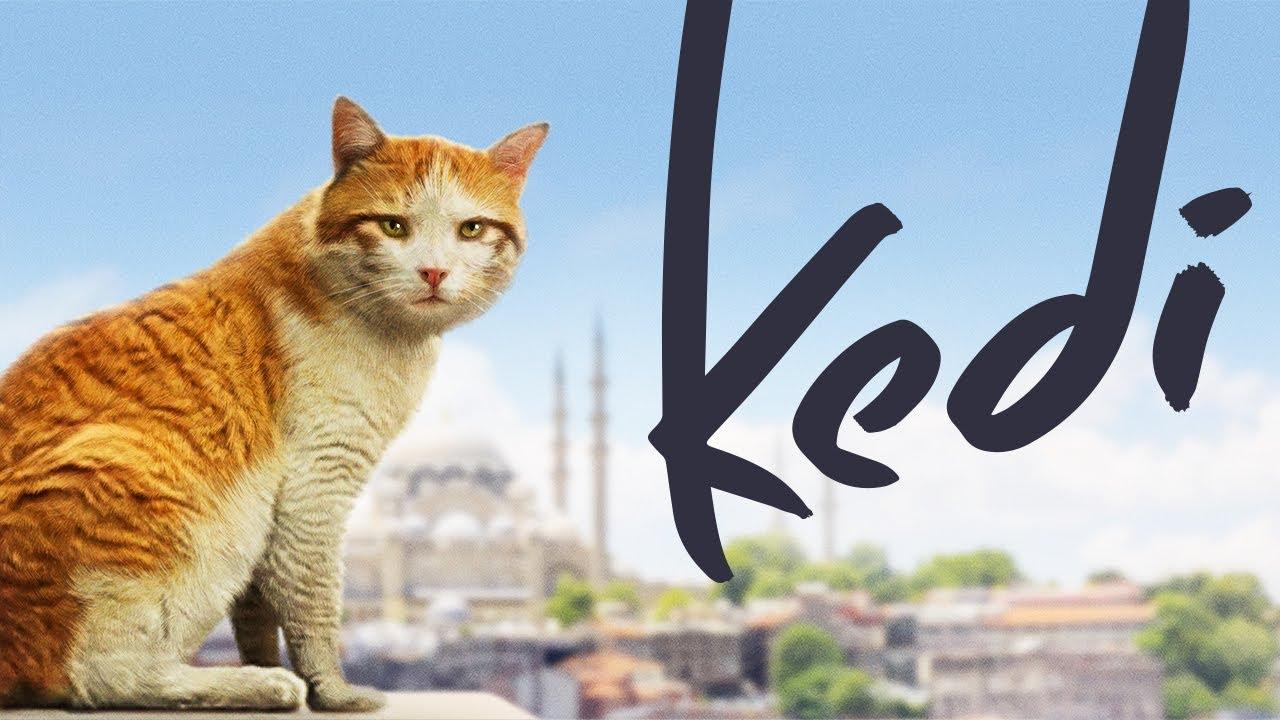 Kedi: Von Katzen und Menschen - Dokumentarfilm kostenlos im Stream (ARD)