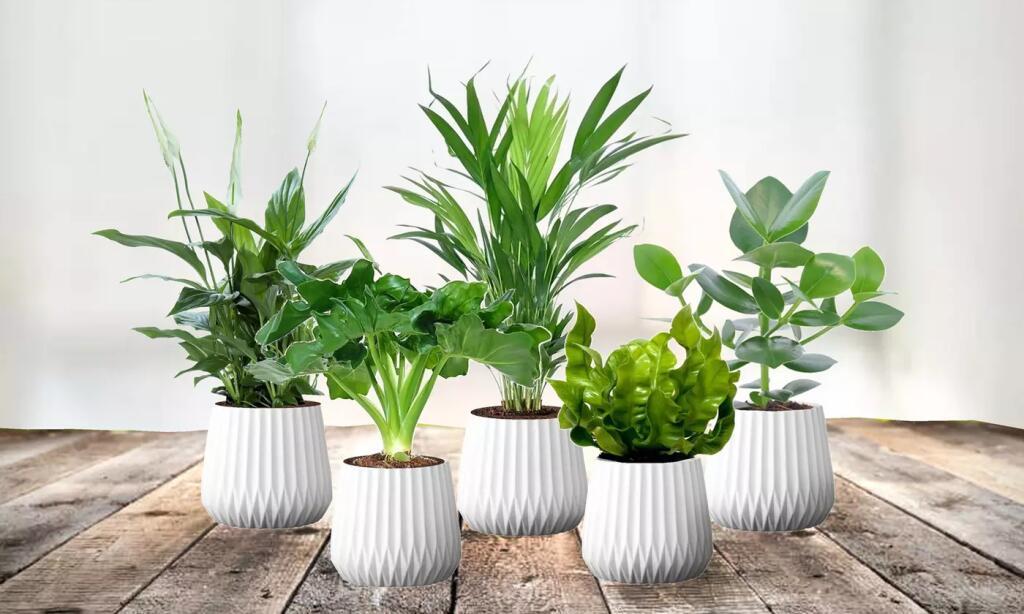 5 luftreinigende Pflanzen: Philodendren, Balsamapfel, Goldfruchtpalme, Schneideblatt und Streifenfarne