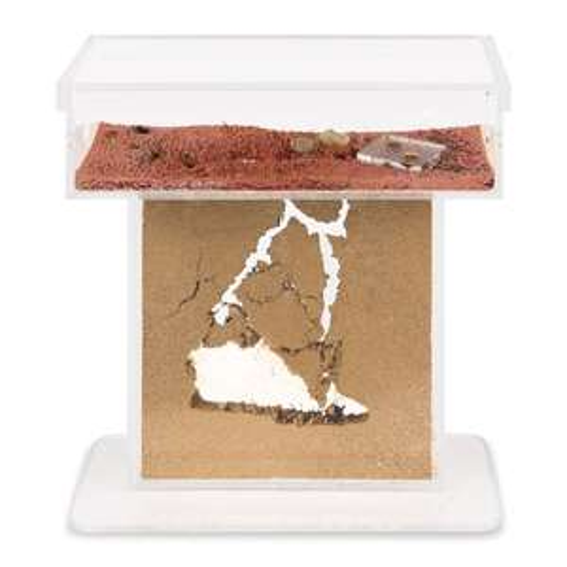 AntHouse - Natürliche Ameisenfarm aus Sand - Acryl T Kit + kostenlos Ameisen dazu Ant farm, Formicarium, Ants
