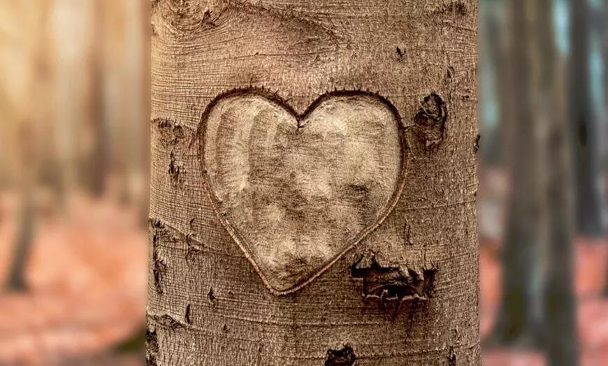 (Valentinstag) Valentinsbaum mit persönlicher Widmung (max. 200 Zeichen) pflanzen lassen