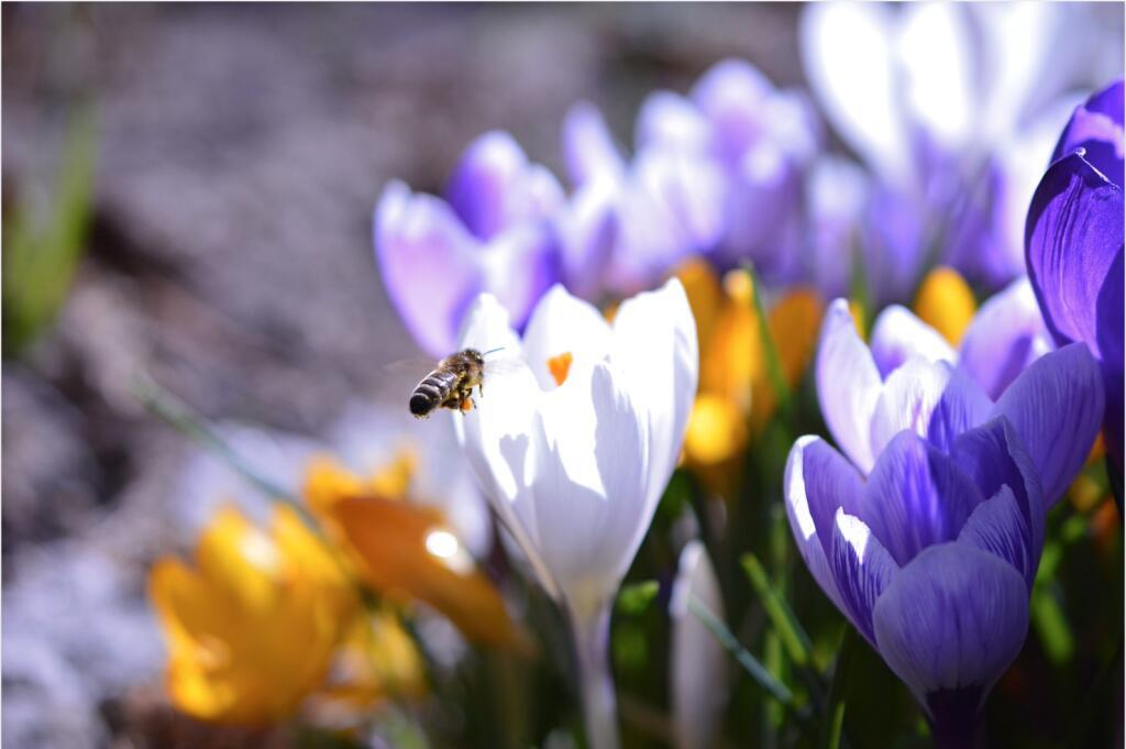 mydealz Garten,- Balkonsaison Frühjahr KW 10, Wochenübersicht die Dritte