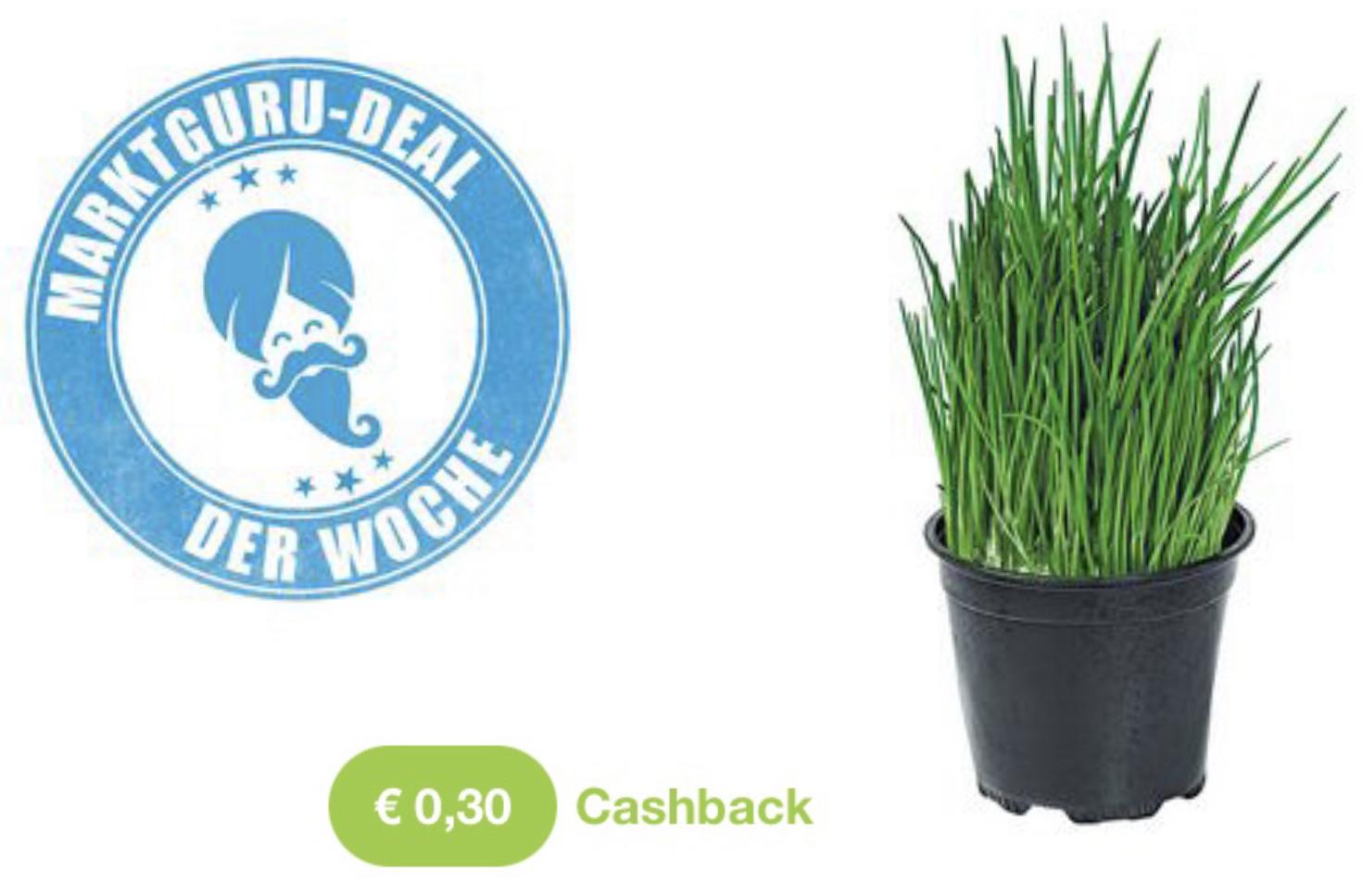 0,30€ Cashback auf Schnittlauch ab 0,31€ Einkaufswert