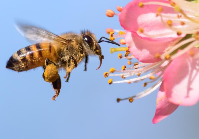 Gratis Blumensamen für Bienen