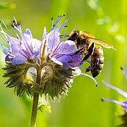 (Ökoland) ein Päckchen Wildblumensaatgut gratis