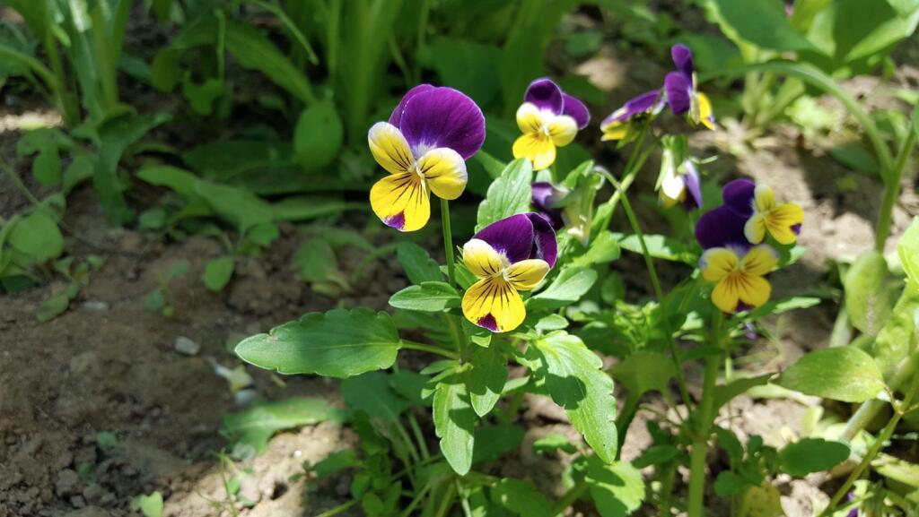 mydealz Garten,- Balkonsaison Frühjahr KW 14, Wochenübersicht die Sechste