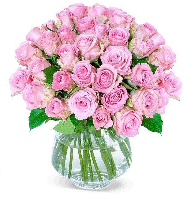 37 pinke Rosen *Pink Diamonds* inkl. Versandkosten // alternativ 40 Überraschungsrosen zum gleichen Preis