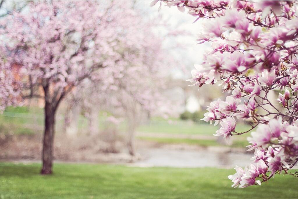 mydealz Garten,- Balkonsaison Frühjahr KW 15, Wochenübersicht die Achte