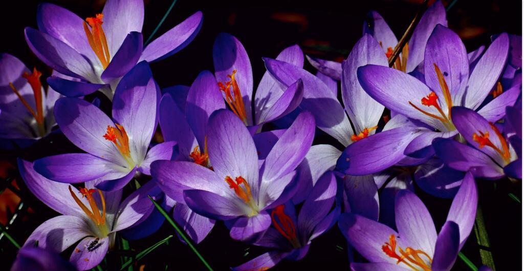 mydealz Garten,- Balkonsaison Frühjahr KW 16, Wochenübersicht die Neunte