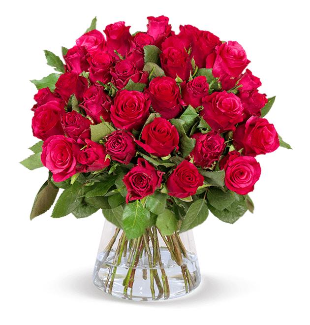 """35 rote Rosen """"ClassicRed"""" (50cm Länge, 15cm entdornt und angeschnitten, 7-Tage Frischegarantie)"""