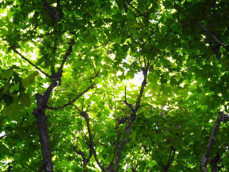 [Vattenfall My Highlights App] gratis Baum mit Treedom pflanzen
