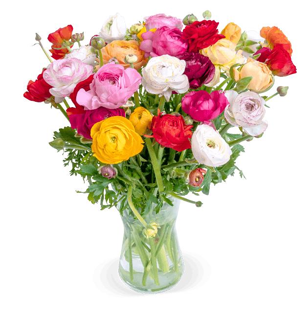 Blumenstrauß mit 50 bunten Ranunkeln und 30cm Durchmesser (Lieferbar 4./5. Mai)
