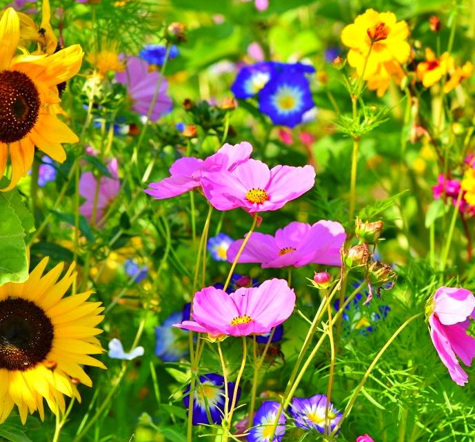 [lokal Garbsen] Stadt verteilt kostenlos Saatgut für Wildblumen (bis 15m²)