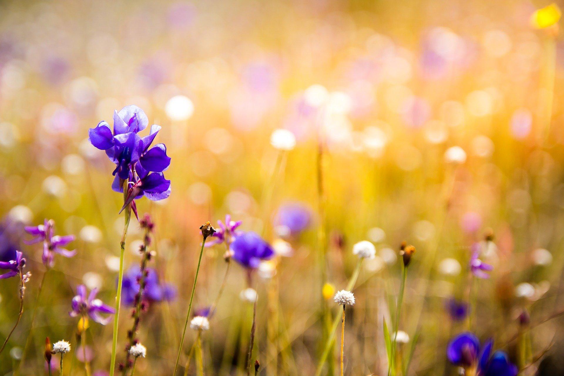 [lokal Hanau] kostenlose Wildblumen-Samen