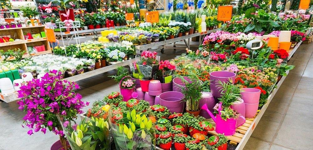 [o2 Kunden] 15% Rabatt bei Pflanzen-Kölle (MBW 35€)