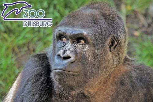 Zoo Duisburg Familienkarte II  52 Euro statt 100 Euro  250 Tickets