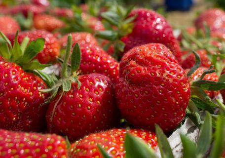 Aldi Nord 500g Erdbeeren für 0,69€ (lokal HH?)