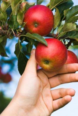Internetseite zeigt, wo herrenloses Obst hängt
