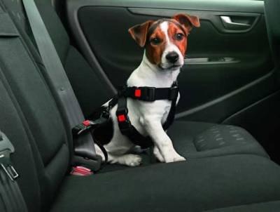 Hundegeschirr für Auto wieder sehr günstig