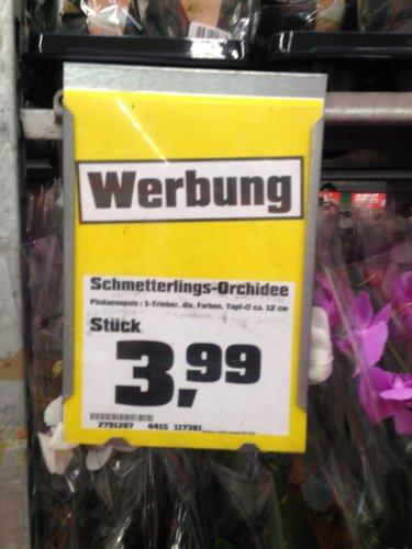 [LOKAL KASSEL] OBI - Orchidee für nur 3,99€