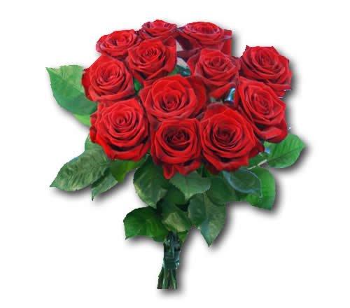 5 Rosen in verschiedenen Farben für 0,99€ im Markt (real bundesweit)
