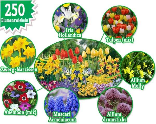 250 Blumenzwiebeln - 8 verschiedene Sorten für 21,95€ frei Haus @guut.de