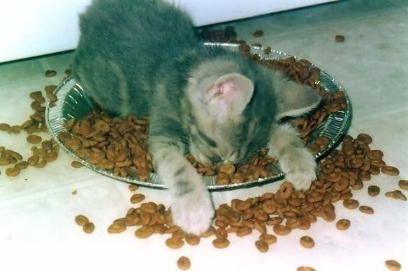 Purina Katzenfutter bis 20€. (Geld-zurück-Garantie)