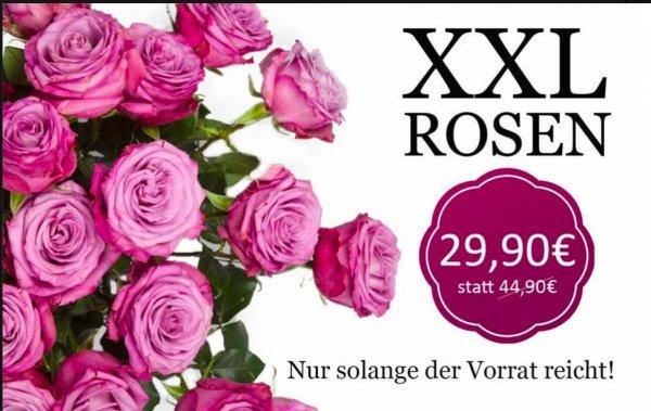 20 lila Rosen für 15€ weniger, 29,90€ statt sonst 44,90€!