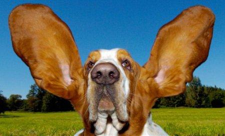 """zwei Fachmagazine """"Der Hund"""" gratis testen - nicht selbstkündigend -"""