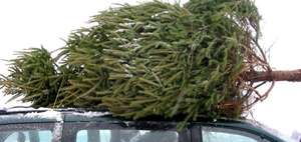 Tannenbaumverkauf bei Möbel Kraft