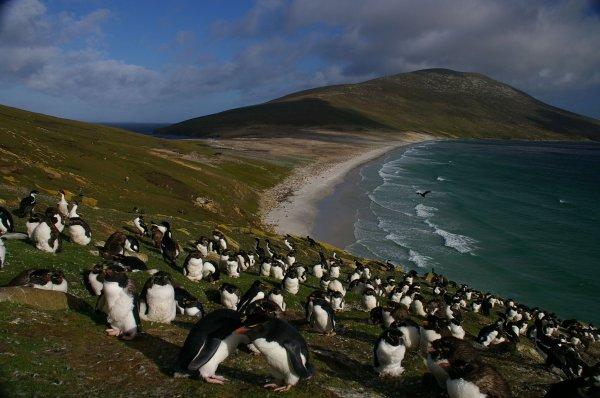 Kracher, für 1073 Euro mind. zu den Falklandinseln, Stopover Feuerland und Patagonien, Stopover Traumwüste Atacama und große Andenreise.Rückreise München möglich
