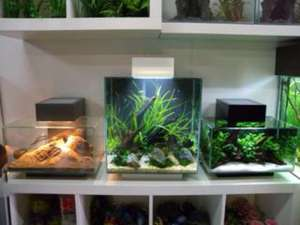 Fluval Edge 2 Design Aquarium 46L