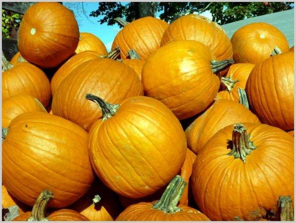[Ludwigshafen] Kostenlose Riesenkürbis-Samen für Halloween perfekt zum Schnitzen