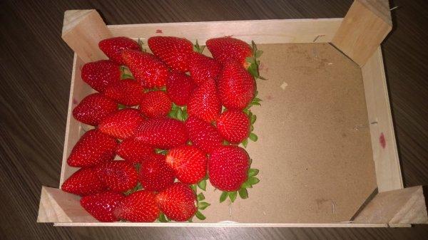 Nur im Globus Erfurt ? Palette Erdbeeren die wirklich schmecken ...