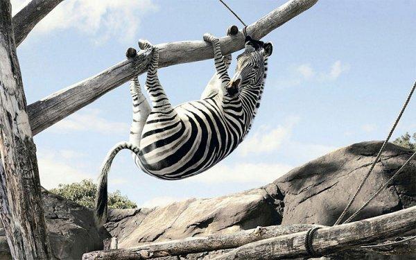 [Lokal Erfurt] 1 Jahr kostenlos in den Zoopark für frischgebackene Eltern