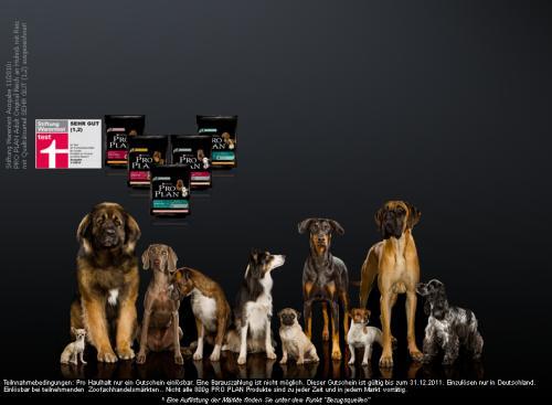 Kostenlose 800g PRO PLAN Futterprobe für Ihren Hund sichern