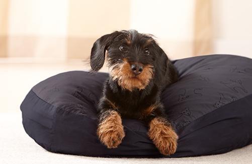 Hundebett bei tchibo.de für 14,95 € statt 39,95 €