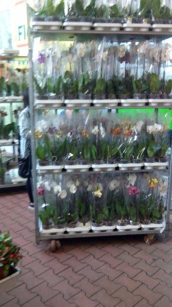 [Ulm] Orchideen im Hornbach an der Blaubeurer Str für 1,99/Stück