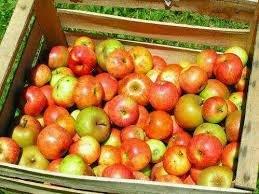 Apfel-Deals: 5kg deutsche Tafel-Äpfel für 2,77 EUR Netto Markendiscount und 2kg für 0,99 EUR bei penny