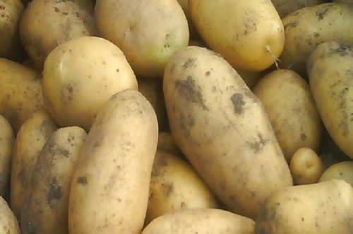 netto mit wuff kartoffeln Deutschland 2kg 0,59€ dank putin