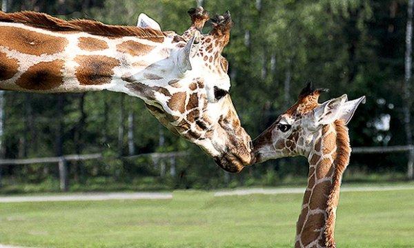 Ticket für Halloween im Safaripark Stukenbrock am 18.-19.10. für 13,90 €