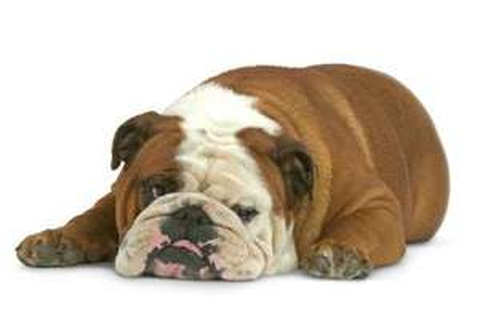 Futter Test-Paket für übergewichtige Hunde und Katzen