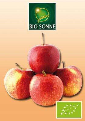 """Allergiker-Apfel """"Santana"""" - 1,59€ für 4 Äpfel"""