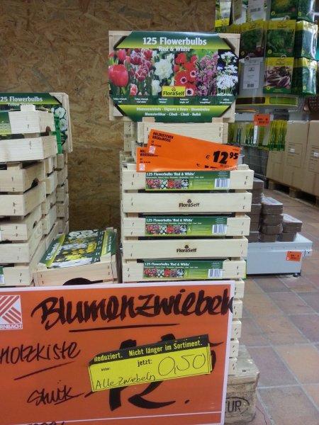 FloraSelf Blumenzwiebeln in Holzkiste für nur je 0,50€! (anstatt 12,50€!) [Lokal Hornbach FRANKFURT]