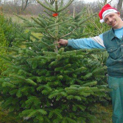 Weihnachtsbaum kaufen und den Kaufpreis als Gutschein erhalten @Pflanzmich.de