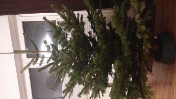 [Lokal Obi Oldenburg] 2 Weihnachtsbäume zum Preis von einem.