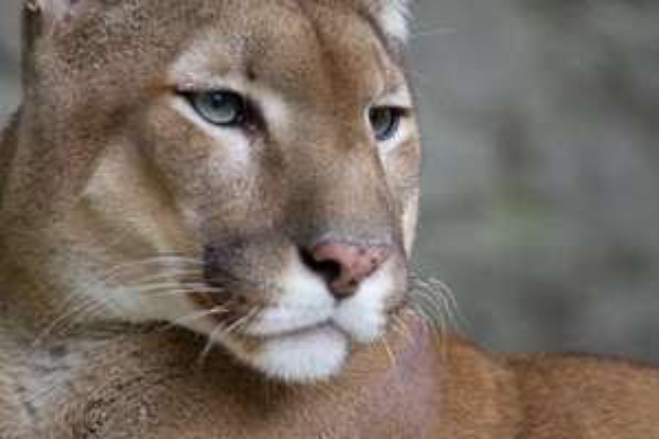 6 er Pack Puma Boxer Boxershorts @ Amazon für 24,99€