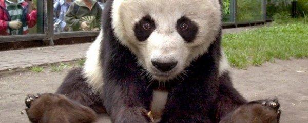 ( Berlin 12.01.) Nachts ins Museum oder Freier Entritt zur Panda Ausstellung im Naturkundemuseum Berlin