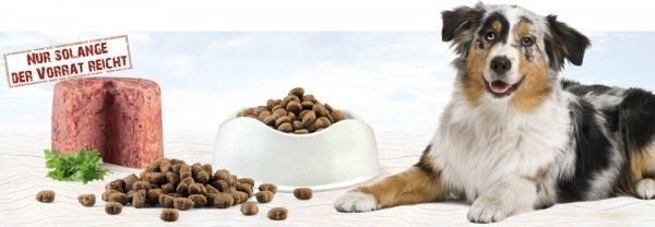 Boswelia Premium Hundefutterproben gratis