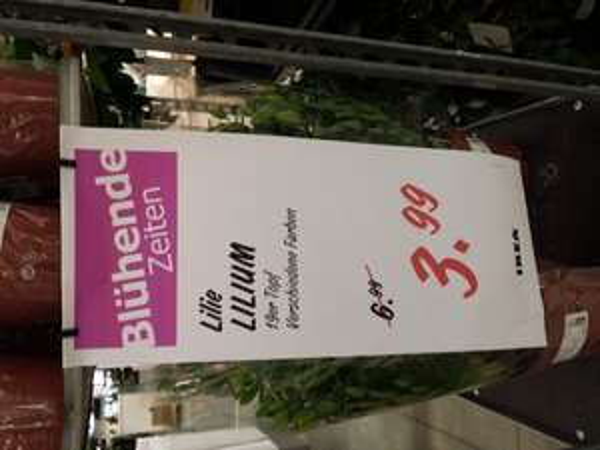 [lokal Ikea Waltersdorf] Lilien für 3.99 € statt 6.99 €